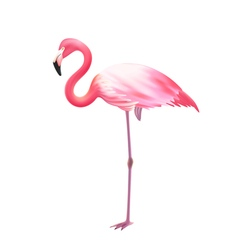 Pink Flamingo One Leg Realistic Icon vector image