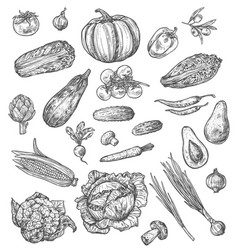 vegetable and mushroom sketch of fresh veggies vector image