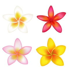 4 Fragipani vector image