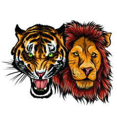 Combined faces lion and tiger vector