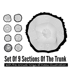 Cross section of the trunk vector