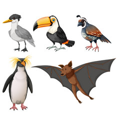 different types of wild birds vector image
