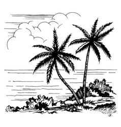 palms and sea sketch vector image