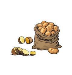 sketch bag raw sliced potato set vector image