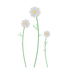 Three White Cosmos Flowers on White Background vector