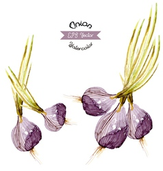 Organic onion watercolor vector image vector image
