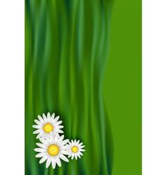 Chamomile daisy flowers vector