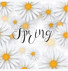 Chamomile flower spring background vector