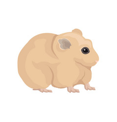 Flat domestic hamster home rodent vector