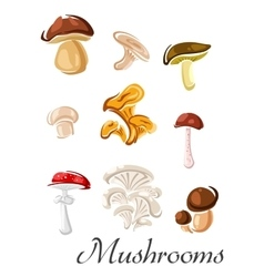 Forest mushrooms set in cartoon style vector image