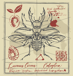 Retro banner with drawing of a stag-beetle vector