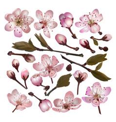 set blossoming sakura pink flowers vector image