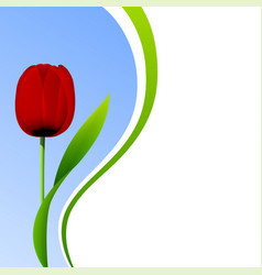 tulip isolated on blue sky background vector image vector image