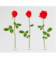 set of red rose flower 3d roses isolated vector image vector image