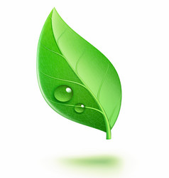 glossy green leaf vector image vector image