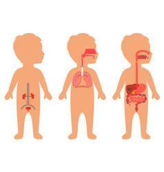 Child body anatomy vector