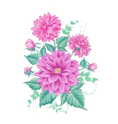 Chrysanthemum isolated design vector
