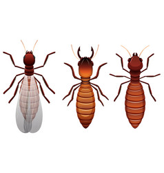 Different stages of a termite vector