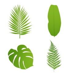 Set of tropical leaves Palmbananafernmonstera vector image