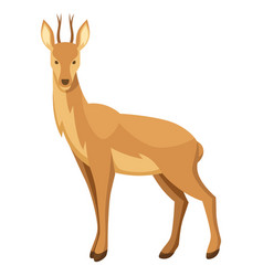 stylized of deer woodland forest vector image