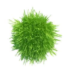 ball green grass vector image