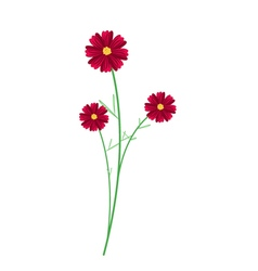 Three Red Cosmos Flowers on White Background vector image vector image