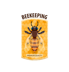 beekeeping icon with honey bee and honeycomb vector image