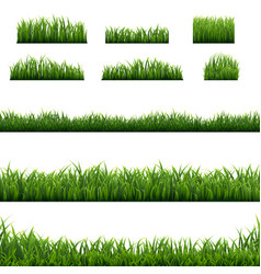 big set green grass borders background vector image