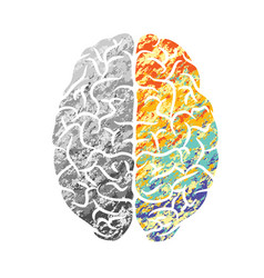 brain gray and color vector image