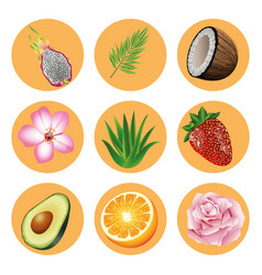 Bundle nine tropical fruits and plants set vector