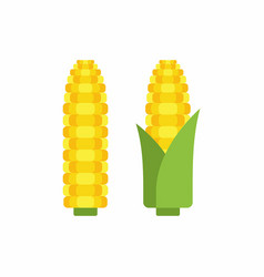 Corn cobs vector