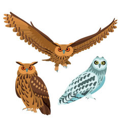 Owls on white background vector image