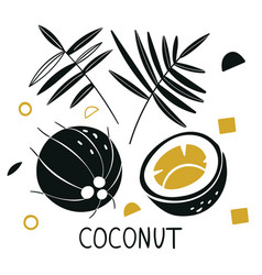 silhouettes coconut coconut hand drawn vector image