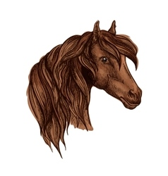 Portrait of noble brown horse mare vector