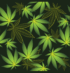 Cannabis on the black background vector