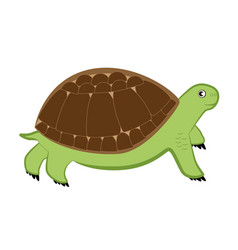 Cartoon turtle on a white background vector