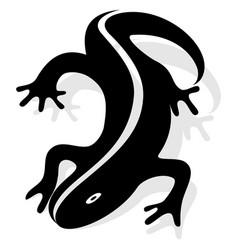 Design salamander vector