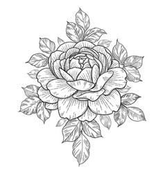 hand drawn floral composition with rose and leaves vector image