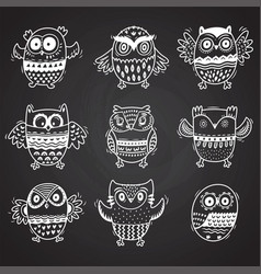 owls drawing with chalk on chalkboard background vector image