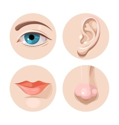 Eye ear mouth and nose vector image