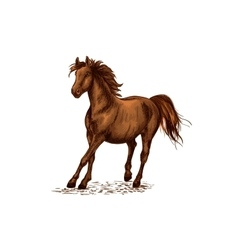 Arabian brown stallion galloping on horse races vector
