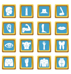 body parts icons azure vector image