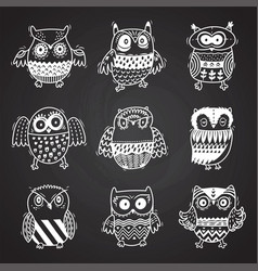 cartoon owls in chalkboard background vector image