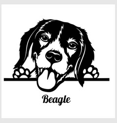 Dog head beagle breed black and white vector
