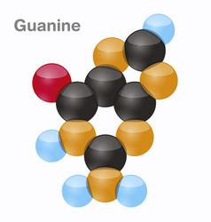 Guanine g purine nucleobase molecule present in vector