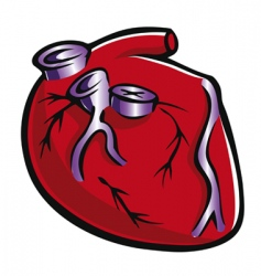 heart and valves vector image