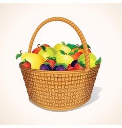 Organic Garden Fruits in Basket vector image