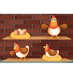 Positions a hen laying eggs vector