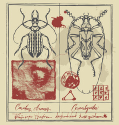 retro banner with detailed drawings of beetles vector image