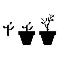 sprout planted in a pot vector image